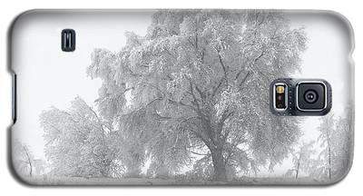 Winter Tree Galaxy S5 Case