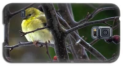 Yellow Finch Galaxy S5 Case