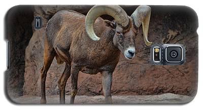 Desert Bighorn Sheep Ram I Galaxy S5 Case