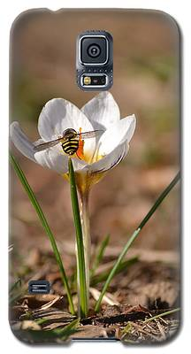 Hoverfly Visitng A Crocus Galaxy S5 Case
