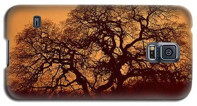 Oak Tree At Sunset Galaxy S5 Case
