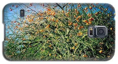 Persimmon Tree Galaxy S5 Case