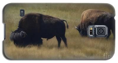 Wyoming Buffalo Galaxy S5 Case