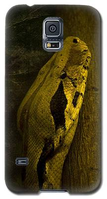 Brown Snake Galaxy S5 Cases