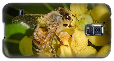 Bees Gathering From Pittosporum Flowers Galaxy S5 Case
