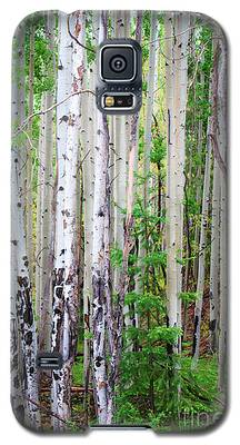 Aspen Grove In The White Mountains Galaxy S5 Case