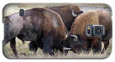 Bison Fight Galaxy S5 Case