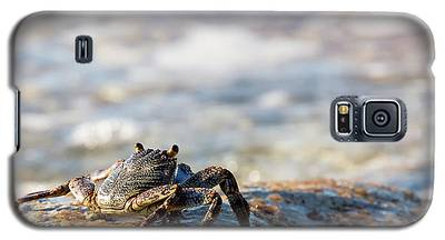 Crab Looking For Food Galaxy S5 Case