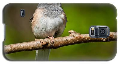Dark Eyed Junco Perched On A Branch Galaxy S5 Case