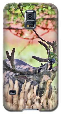 Deer In The Orchard Galaxy S5 Case