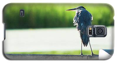 Early Morning Great Blue Heron Galaxy S5 Case