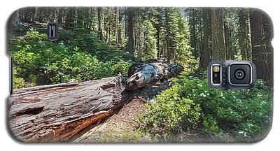 Fallen Tree- Galaxy S5 Case