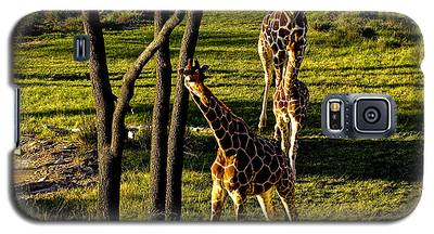 Giraffe Galaxy S5 Case