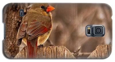 Female Cardinal On The Fence Galaxy S5 Case