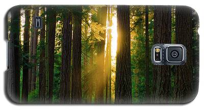 Forest Sunset Galaxy S5 Case
