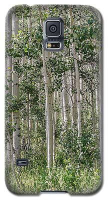 Grove Of Quaking Aspen Aka Quakies Galaxy S5 Case