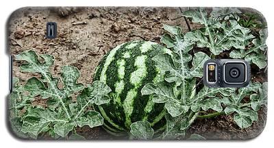 Ky Watermelon Galaxy S5 Case