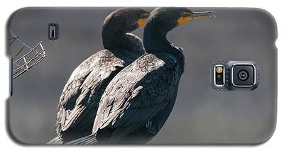 Pair Double-crested Cormorant 3 March 2018 Galaxy S5 Case
