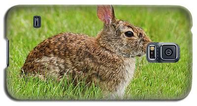 Rabbit In A Grassy Meadow Galaxy S5 Case
