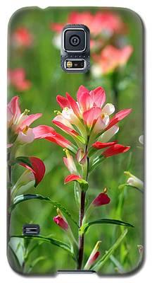 Scenic Paints Galaxy S5 Case
