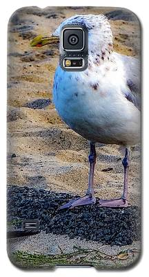 See The Gull Galaxy S5 Case