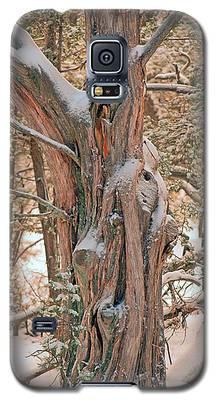 Snowy Dead Tree Galaxy S5 Case