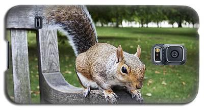 Squirrel Bench Galaxy S5 Case