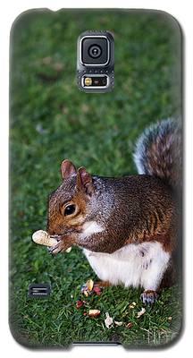Squirrel Eating Galaxy S5 Case