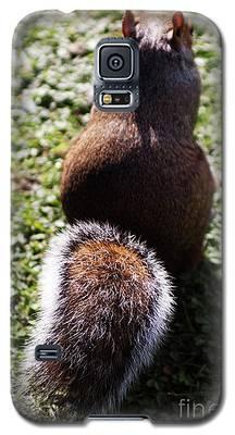 Squirrel S Back Galaxy S5 Case