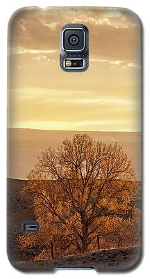 Tree In Desert At Sunset Galaxy S5 Case