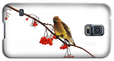 Winter Birds - Waxwing  Galaxy S5 Case