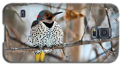 Yellow-shafted Northern Flicker Staying Warm Galaxy S5 Case