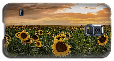 A Field Of Sunflowers At Sunset Galaxy S5 Case