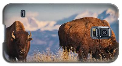 Buffalo Grazing At Dawn Galaxy S5 Case