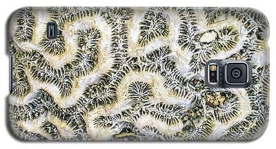 Fossilized Brain Coral Galaxy S5 Case