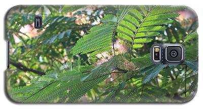 Mimosa Tree Blooms And Fronds Galaxy S5 Case