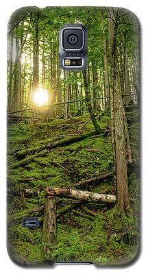 Monashee Forest Portrait Galaxy S5 Case
