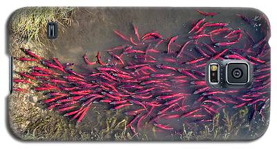 Spawning Kokanee Salmon Galaxy S5 Case
