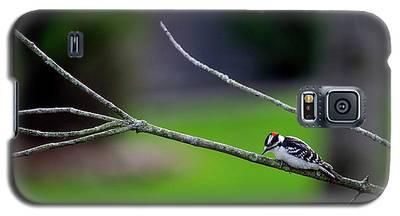 The Downey Woodpecker Galaxy S5 Case