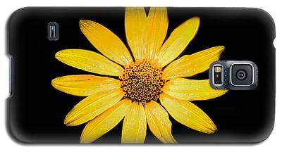 You Look Glazed Galaxy S5 Case