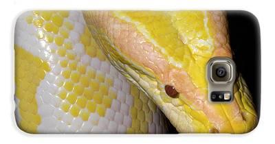 Burmese Python Galaxy S6 Cases