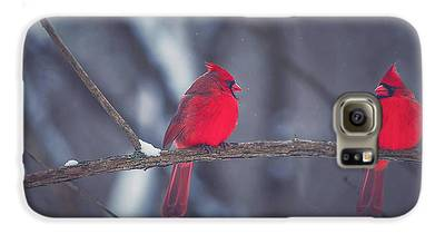 Cardinal Galaxy S6 Cases