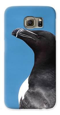 Razorbill Galaxy S6 Cases