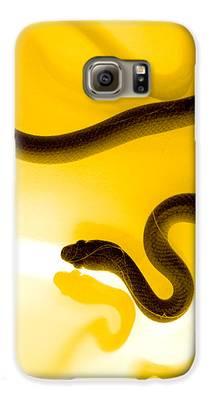 Reptile Galaxy S6 Cases