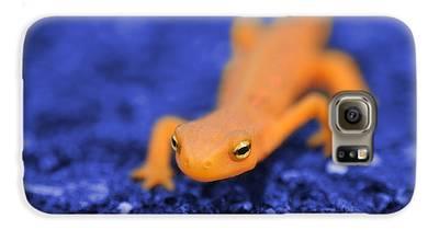 Salamander Galaxy S6 Cases