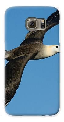 Albatross Galaxy S6 Cases