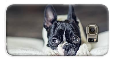 Boston Terrier Photographs Galaxy S6 Cases