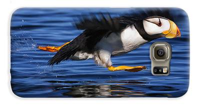 Puffin Galaxy S6 Cases