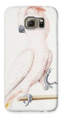 Parakeet Galaxy S6 Cases