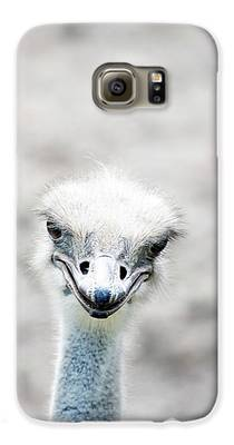 Ostrich Galaxy S6 Cases